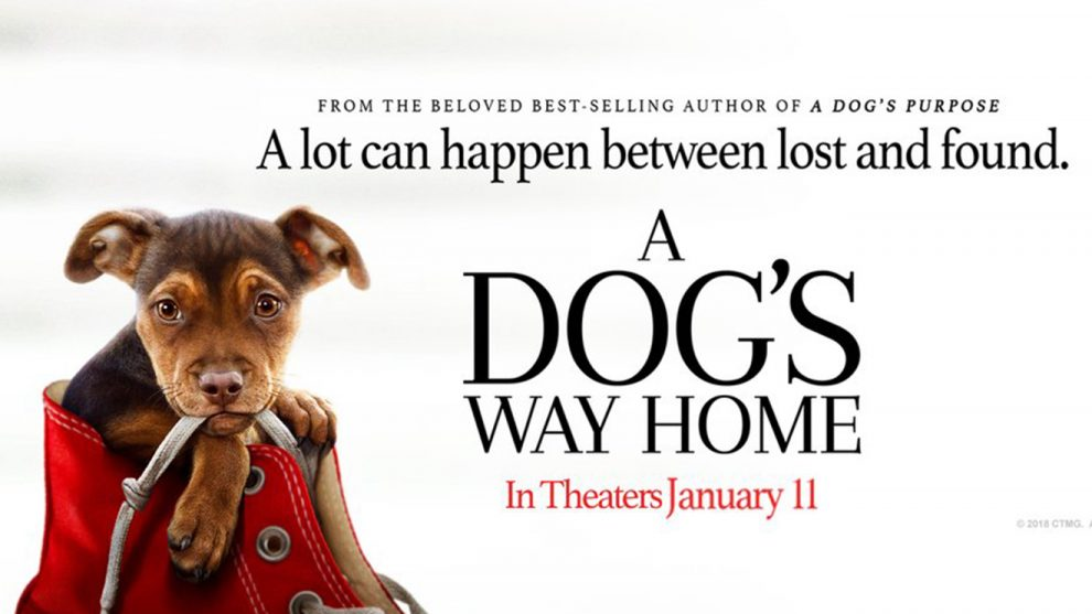 A Dog's Way Home Movie Online Download
